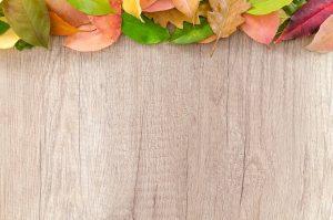 autumn, orange, nature