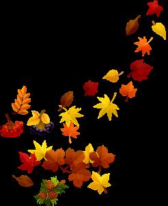 fall leaves, autumn leaf, nature