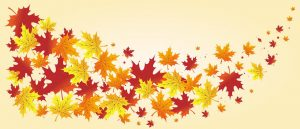 foliage, leaves, maple leaves
