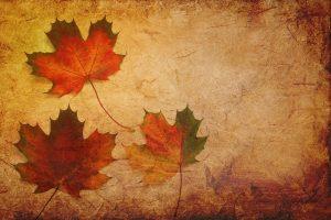 texture, background, maple